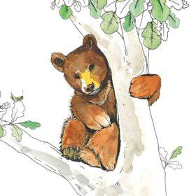 Dobbelt kort - Bear