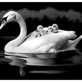 Skrapefolie A4 silver swan